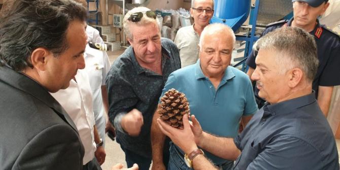 """""""Zeytin şehri"""" fıstıkçılıkta da iddialı"""