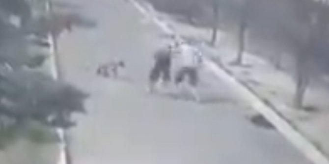 Diyarbakır'da HDP'li belediyeye barınaktaki hayvanlara şiddet tepkisi
