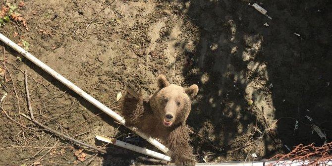 Mahsur kalan anne ayı ve iki yavrusu kurtarıldı