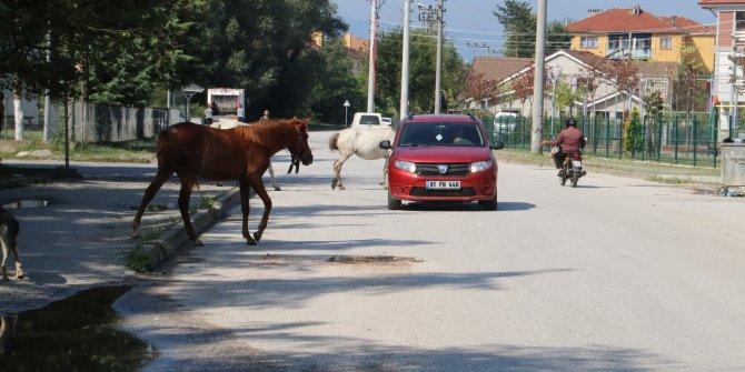 Başıboş atlar mahalle sakinlerini tedirgin ediyor