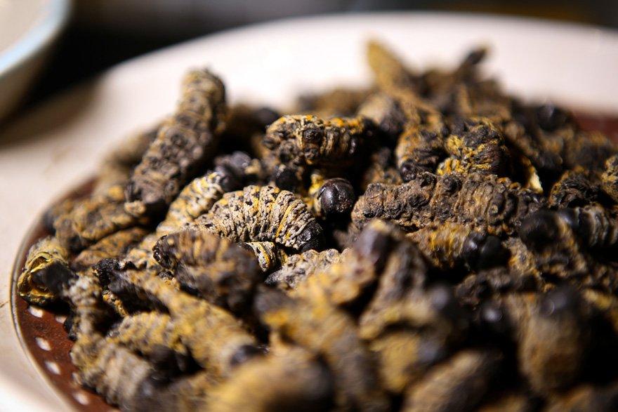 Bu lokantada yemekler böceklerden yapılıyor