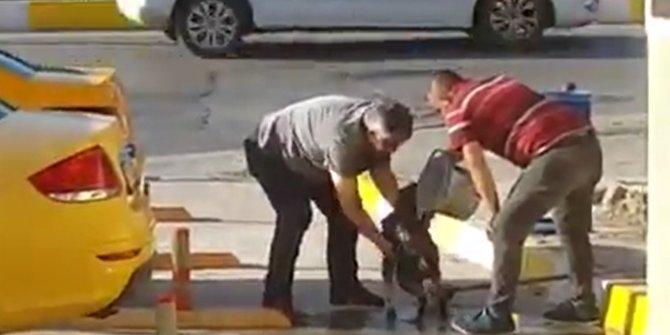 Taksilciler, sokak köpeğini yıkadı