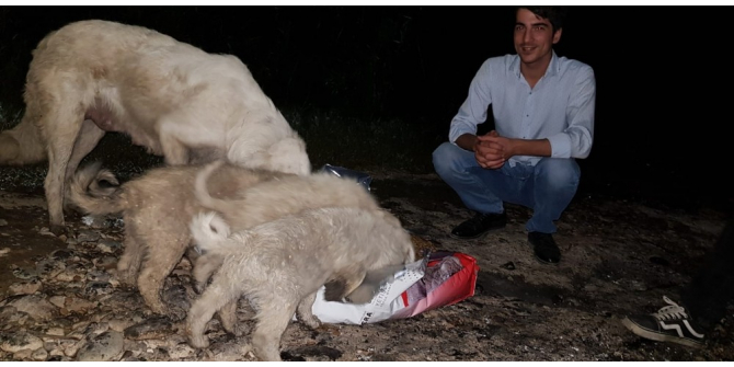 MHP'li gençler sokak hayvanlarına sahip çıktı