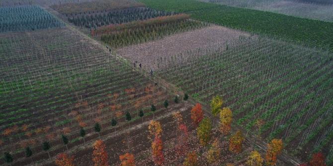 Büyükşehir, 125 hektar alanda yerli fidan üretiliyor