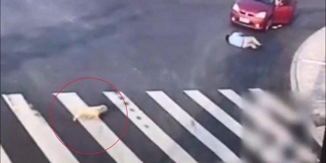 Çin'de köpekten yayalara 'trafik dersi'
