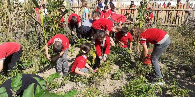 Okul bahçesinde hasat yapıldı, yemekler pişirildi