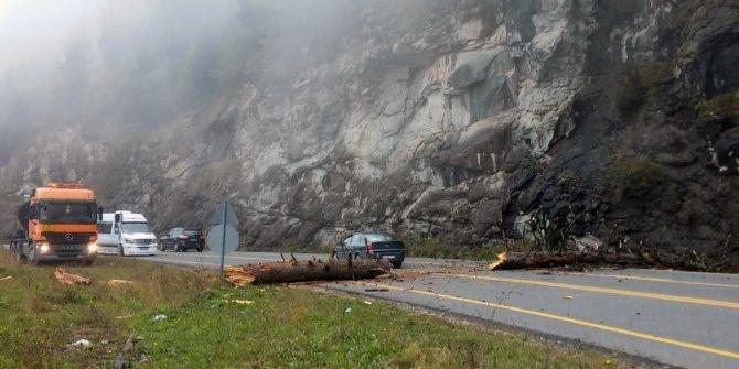 Devrilen ağaç nedeniyle yol ulaşıma kapandı