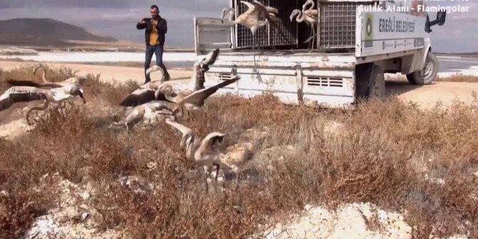 20 yavru flamingoyu satamadan yakalandı