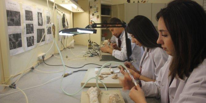 7 milyon yıllık hayvan fosilleri üniversite öğrencileri tarafından temizlenip, sergileniyor
