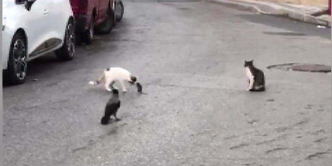 İstanbul'da sokaklarda kedi ve farelerin oyunu...   Kargalar seyirci oldu