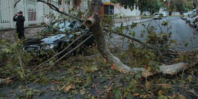 Beşiktaş'ta ağaç dalı devrildi, yol kapandı