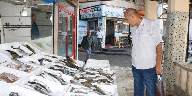 Hatay'da balık bolluğu