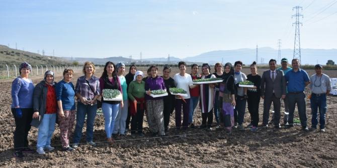 Aliağalı üretici kadın çiftçiler tarlaya indi