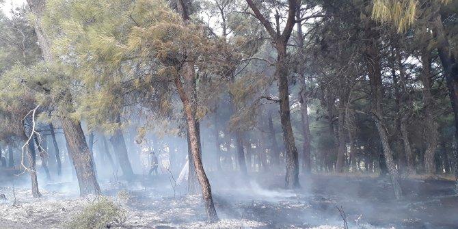 Bayramiç'te orman yangını; 20 dönüm alan kül oldu