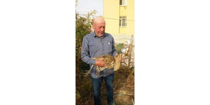 Konya'da nesli tükenmekte olan balaban kuşu bulundu