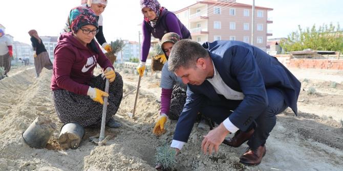 Burdur'da 4 bin lavanta toprakla buluştu
