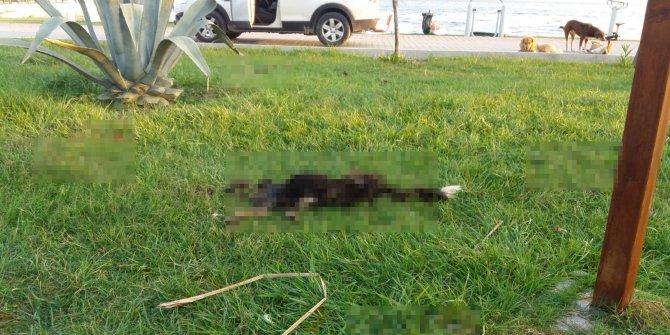 6 parçaya ayrılmış köpek ölüsüyle ilgili 'satanist ayini' iddiası