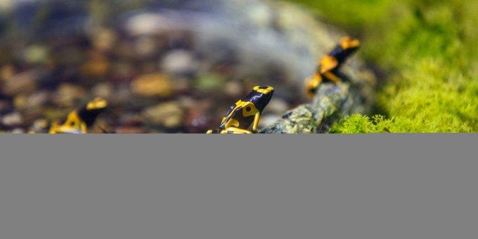 Dünyanın en zehirli sürüngenleri akvaryumda