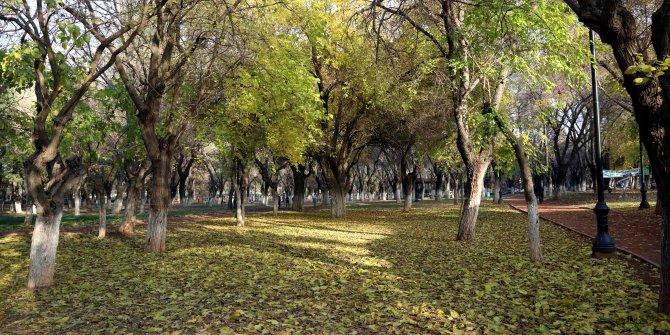 Gaziantep'te kış mevsiminde sonbahar manzarası