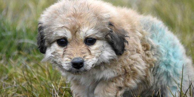Kerpiç evin enkazından kurtarılan yavru köpek 'Mucize' korumaya alındı
