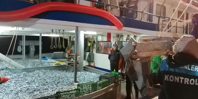 Rize'de 30 ton küçük boy balığa el konuldu