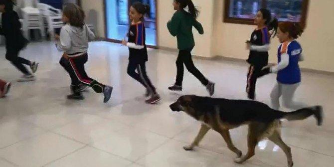 Voleybol takımının antrenmanında sokak köpeği sürprizi