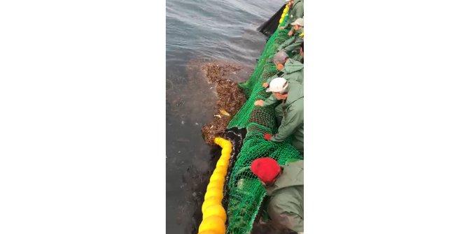 Ağlara takılan deniz kaplumbağasını böyle kurtardılar