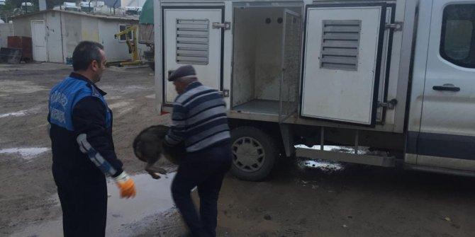 Sokak köpeğini av tüfeğiyle vurarak yaralayan şüpheli gözaltında