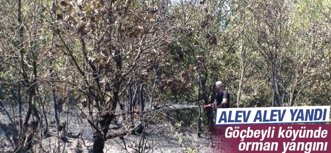 Pendik'in Göçbeyli Köyünde Orman Yangını