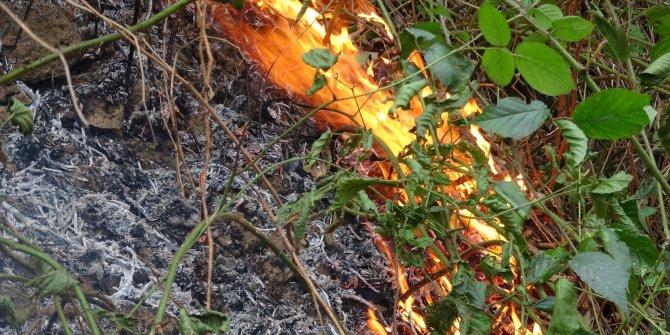 Karadeniz'de 5 ilde 71 noktada yangınlar sürüyor (2)