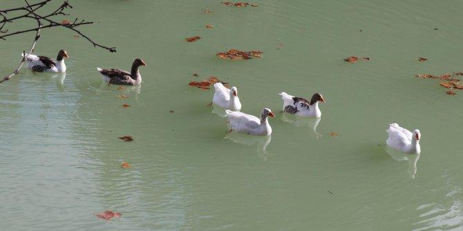Gizli cennet 'Kusuru Gölü' koruma altına alındı