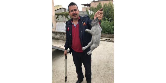 Bacanın içine düşen tavşan kurtarıldı