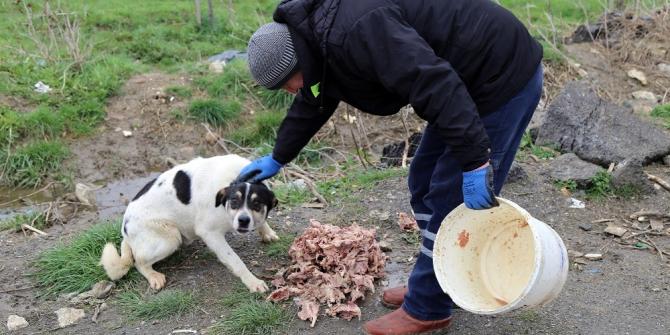 Büyükçekmece Belediyesi sokak hayvanları için seferber oldu