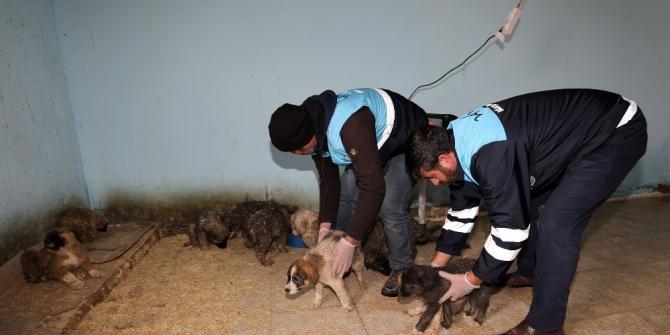 Aç kalan yavru köpekler için seferberlik