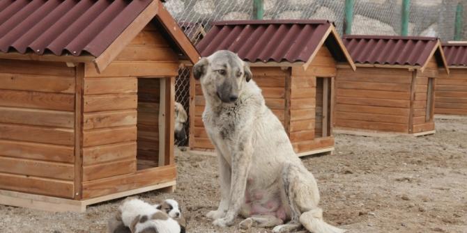 Erciş Belediyesinden sokak hayvanları için barınak