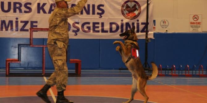 JAKEM'de eğitimi tamamlayan 62 köpek 31 ilde göreve başlayacak