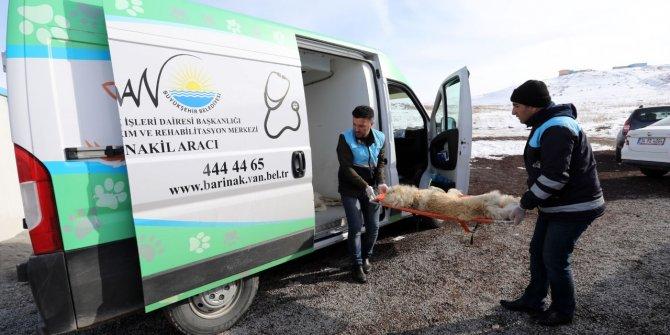 Sokakta aç kalan yavru köpeklere, belediye ekipleri sahip çıktı