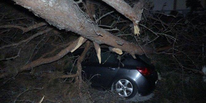 Balıkesir'de fırtına çatıları uçurdu, ağaçları devirdi