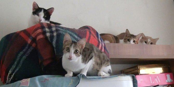 2 odalı evde 17 kedi ile birlikte yaşıyor