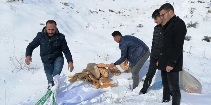Ahlat'ta yaban hayvanları için doğaya yem bırakıldı