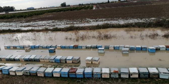 Mersin'de 15 bin arı kovanı sular altında kaldı