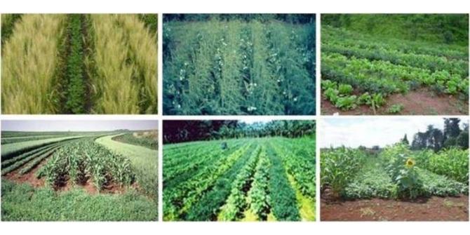 Tarımsal desteklemeler için 'ekim nöbeti' uygulamasına dikkat