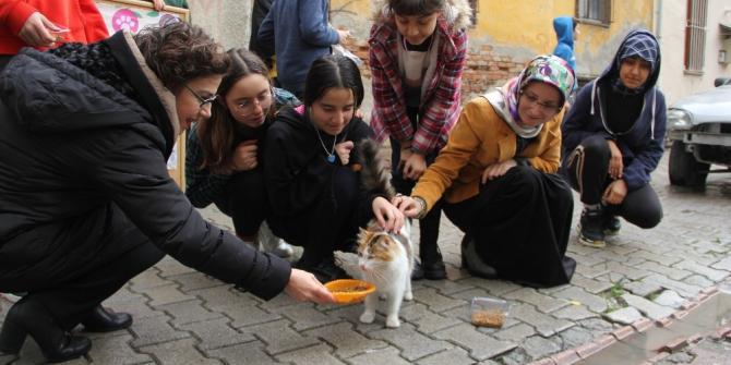 Sokak sokak kedi maması dağıttılar