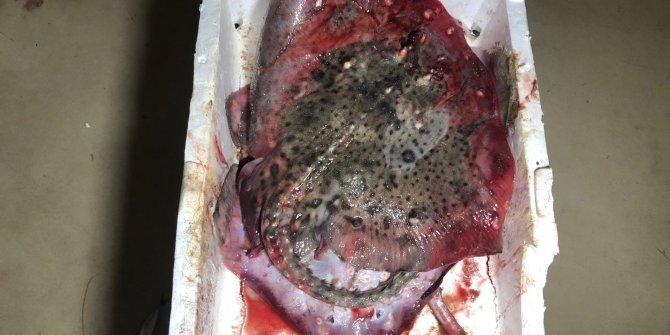 Marmara Denizi'nde yapılan denetimlerde 53 ton balığa el konuldu