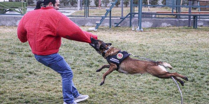 Kaçakçılara göz açtırmayan köpekler, Ankara'da eğitiliyor