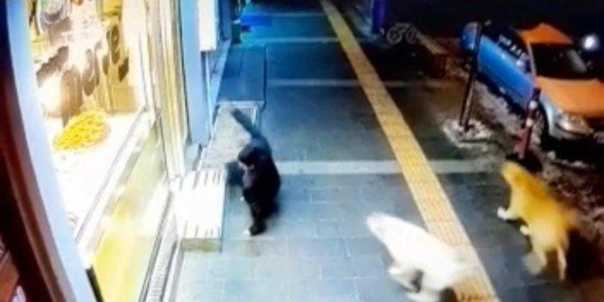 Kars'ta sokak köpekleri tehlike saçıyor