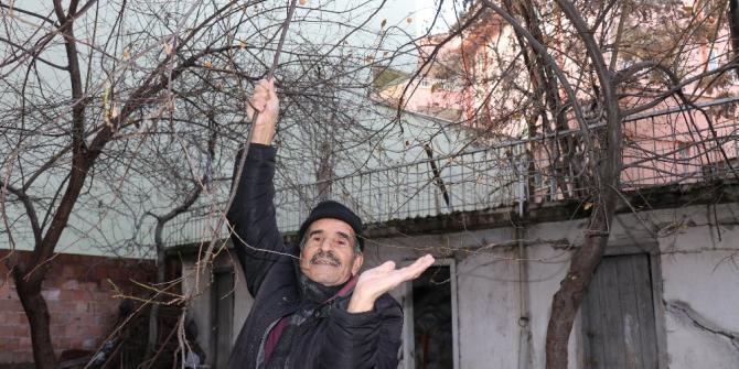 Malatya'da erik ağacı kış ortasında meyve verdi