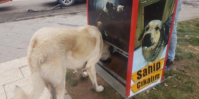 Sokak köpekleri için Mamamatik yaptılar