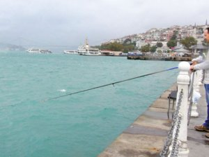 İstanbul Boğazı yeşile döndü