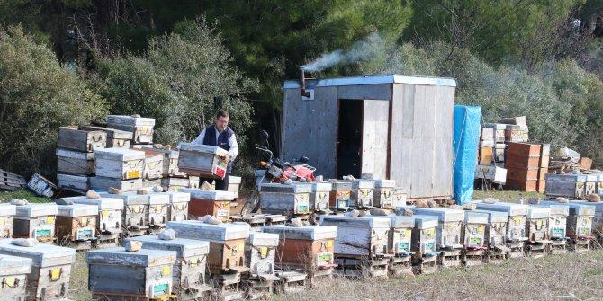 Barakada kalıyor, arılarla yatıp arılarla kalkıyor